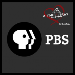 PBS RECOGNIZES A TIME 4 PAWS AND OUR DEDICATION TO HOMELESS PETS
